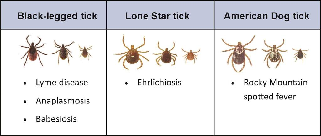 Types of Ticks found in New Jersey