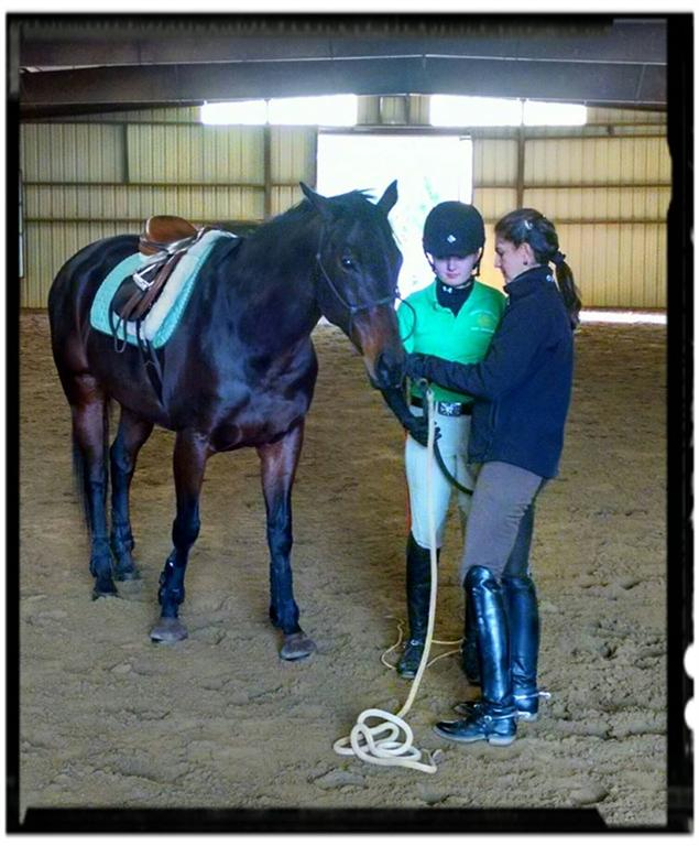 4-H Model Horse Show Images